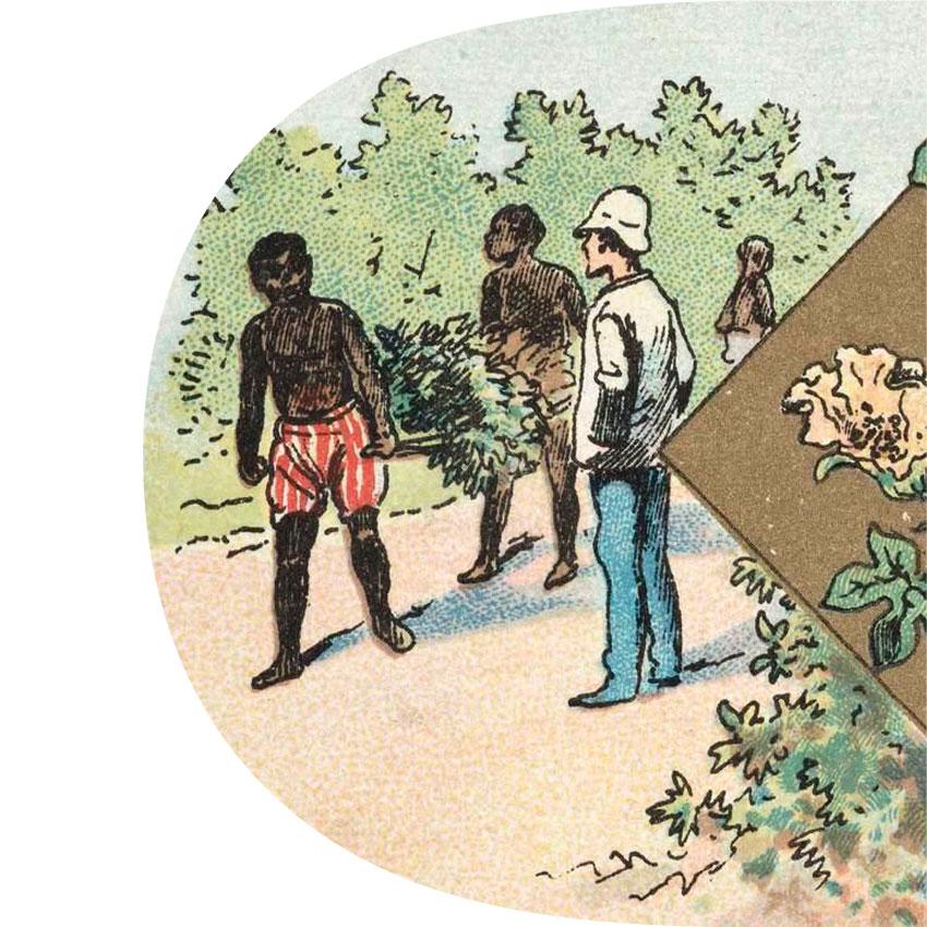 BOTANIQUE ILLUSTRÉE / Le Coton • CHAMPENOIS Ferdinand (imprimeur, éditeur) Esclaves travaillant sous la surveillance du maitre
